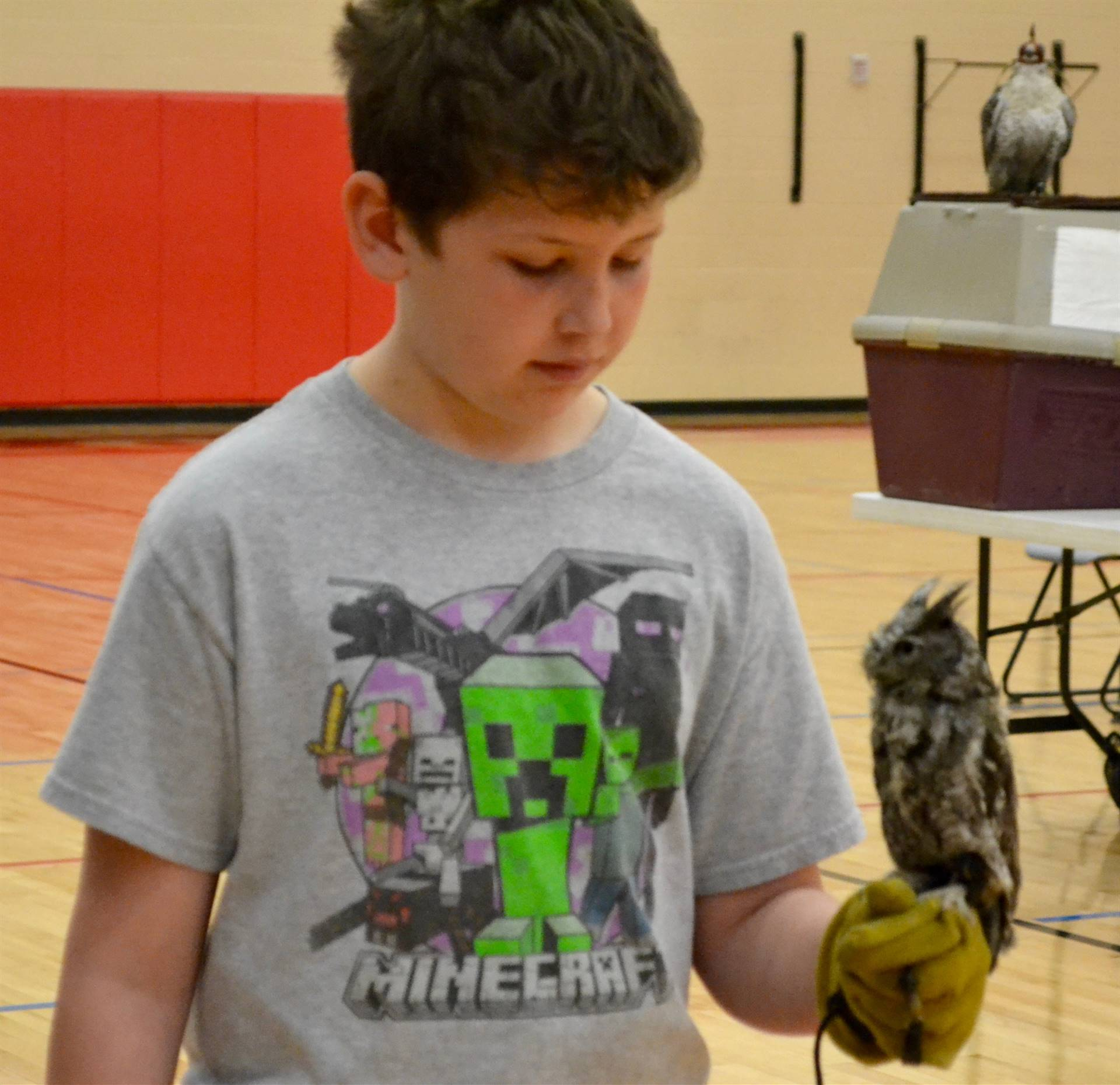 Birds of Prey Demonstration for 5th Grade